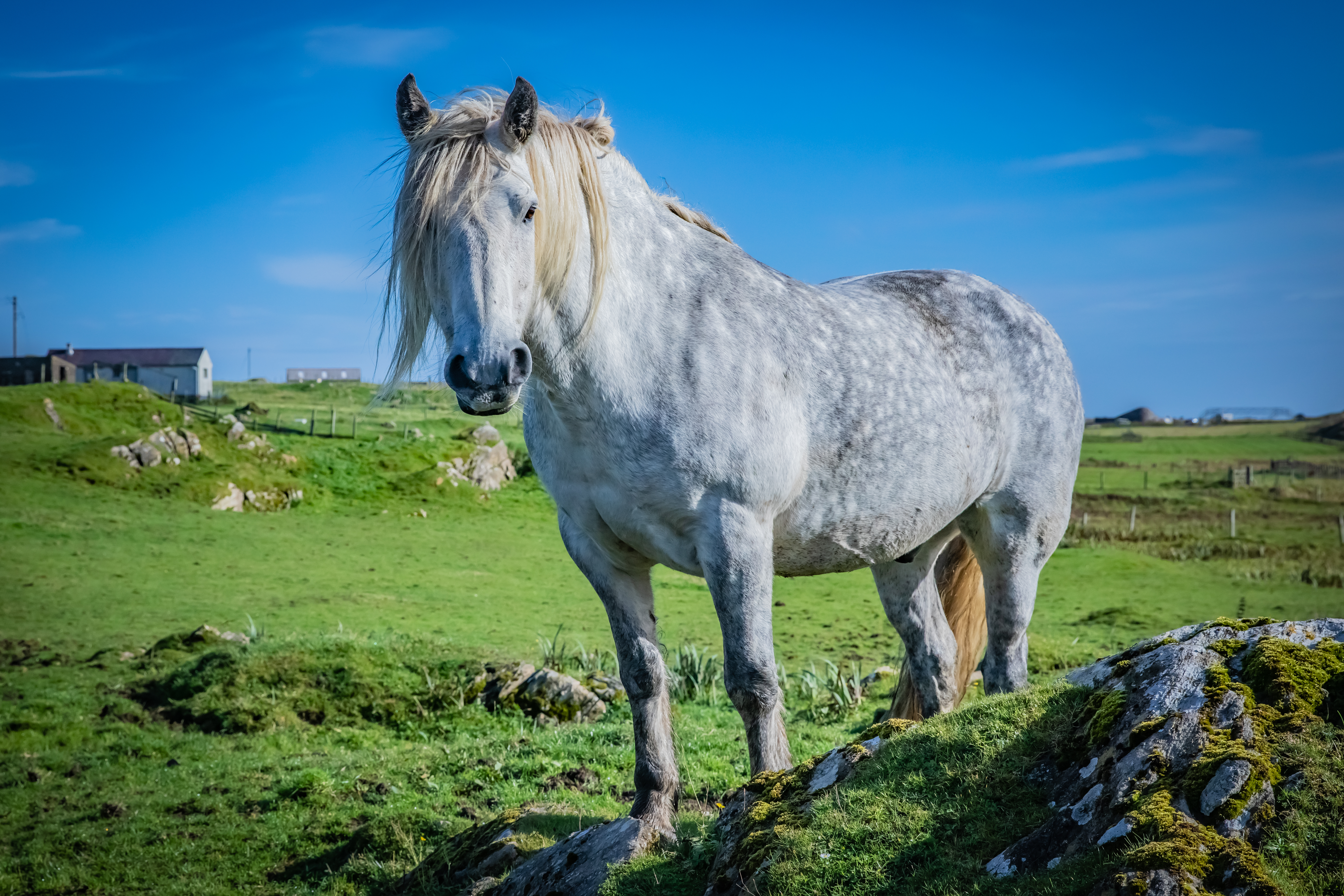The Hardy Highland Pony Haynet